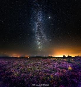 Hartland Moor Nature Reserve