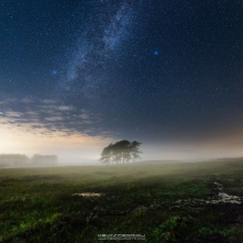 New Forest Milky Way